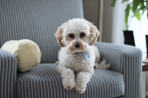 Furniture Upholstery Choices For Animals